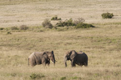 Safari Addo Nationalpark #020